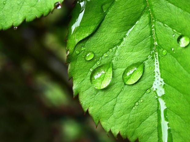 Хотя у растений нет мозга, они способны рассчитывать риски