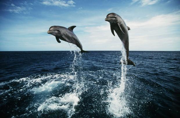 5 самых умных животных на планете после человека
