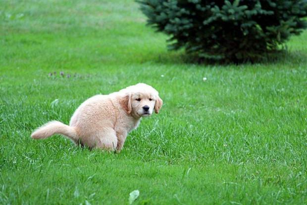 Собаки испражняются в соответствии с магнитным полем Земли