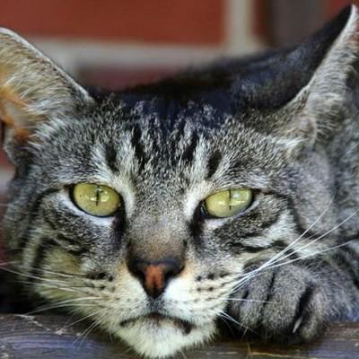 жир у кошки на животе корм go