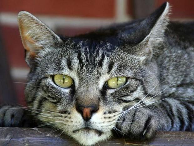 Может ли кот быть другом человека