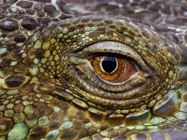 7 черт, которые роднят людей с рептилиями