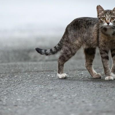 Огромные кошки постепенно разрушают экосистему Австралии