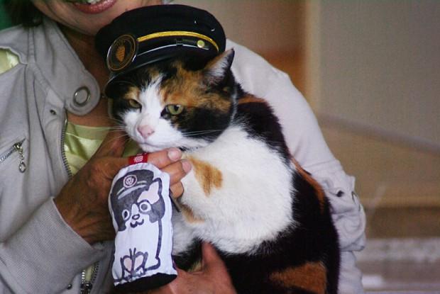 В Японии живёт кошка-смотритель железнодорожной станции