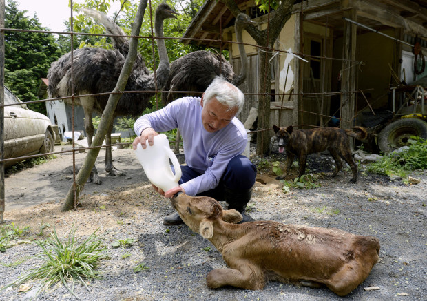 японский секс с животными: