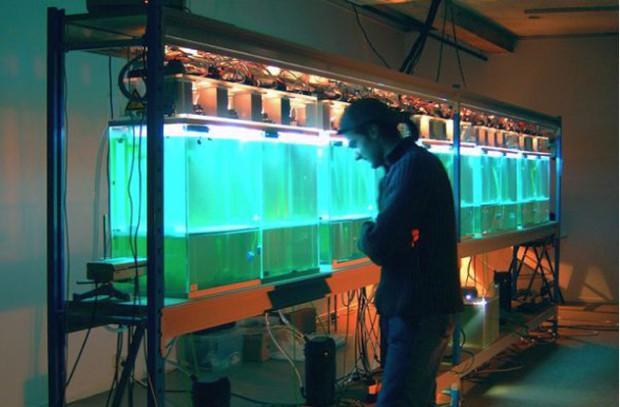 10 потрясающих научных арт-проектов