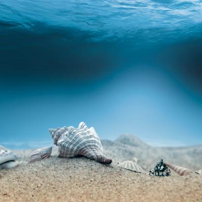 Люди исследовали только 5% океана