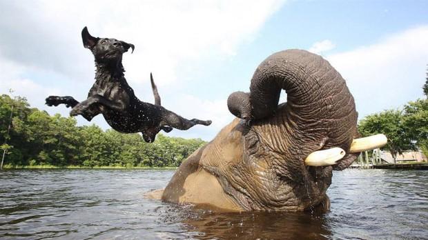 Изо всех животных только собаки и слоны понимают человеческие жесты