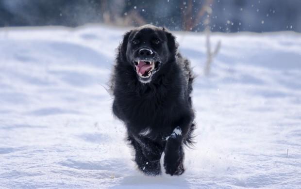 Синдром чёрной собаки и научные мифы