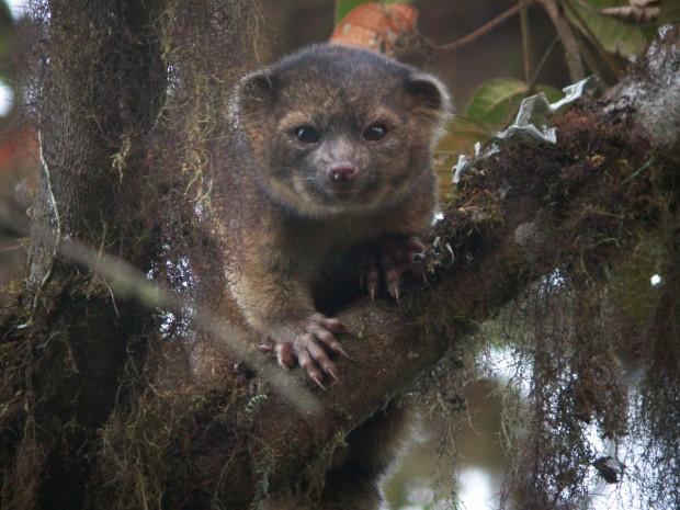 11 новых видов животных, открытых в прошлом году