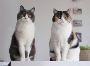 Кошки отказываются сотрудничать с учёными