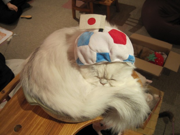 В Токио квартиры продаются вместе с кошками