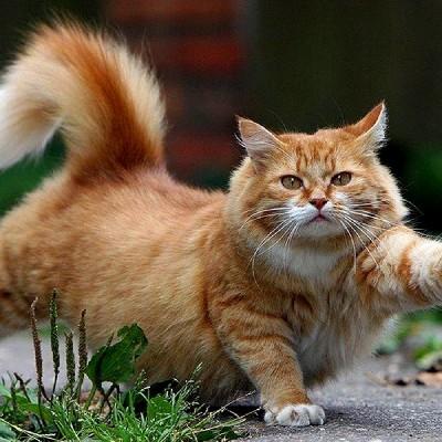 Кис-кис: 10 малоизвестных фактов о кошках