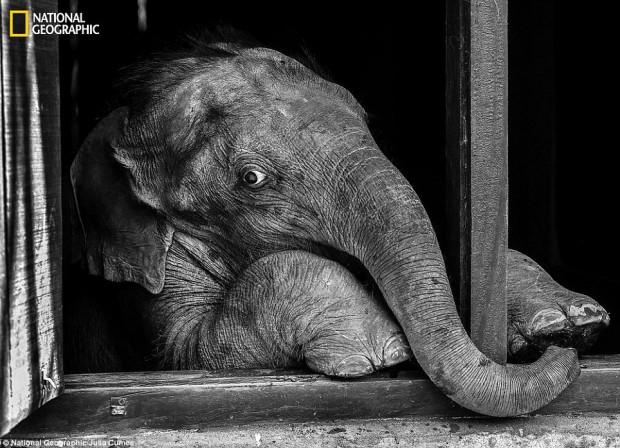 8 самых классных фото животных от сообщества «National Geographic»