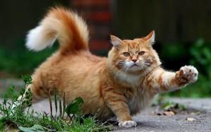 Читайте также: «9 малоизвестных фактов о кошках»