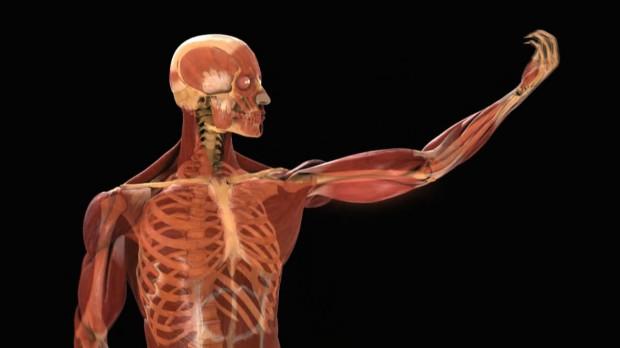 Человеческое тело содержит примерно 81500 ккал