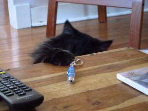 Читайте также: «Охота за лазерной указкой наносит кошке психическую травму»