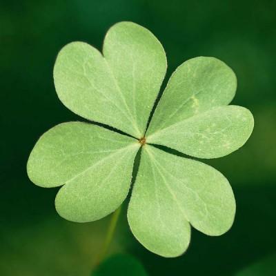 Вы можете «улучшить свою удачу»