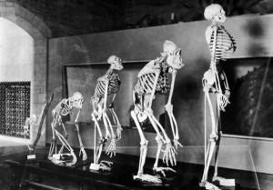 Читайте также: «10 любопытных фактов о странностях эволюции человечества»