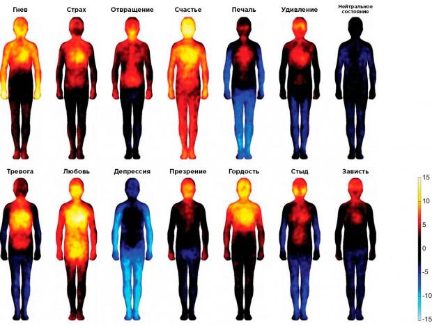Жёлтыми показаны зоны усиления ощущений, синим — области, где чувствительность, наоборот, снижается /© Lauri Nummenmaa, Enrico Glerean, Riitta Hari, and Jari Hietanen