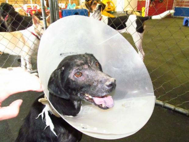 Картинки по запросу Собака, у которой аллергия на людей