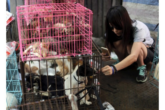 На фестивале собачьего мяса в Китае съели десять тысяч псов (6 фото)