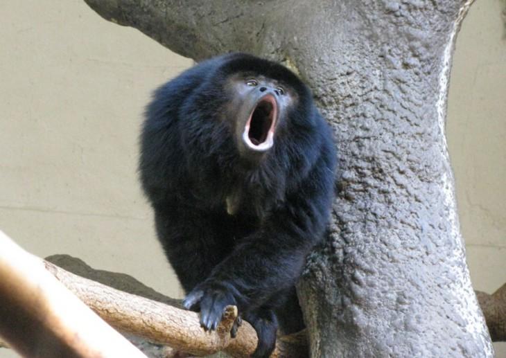10 фактов о животных, доказывающих, что мир — странное место