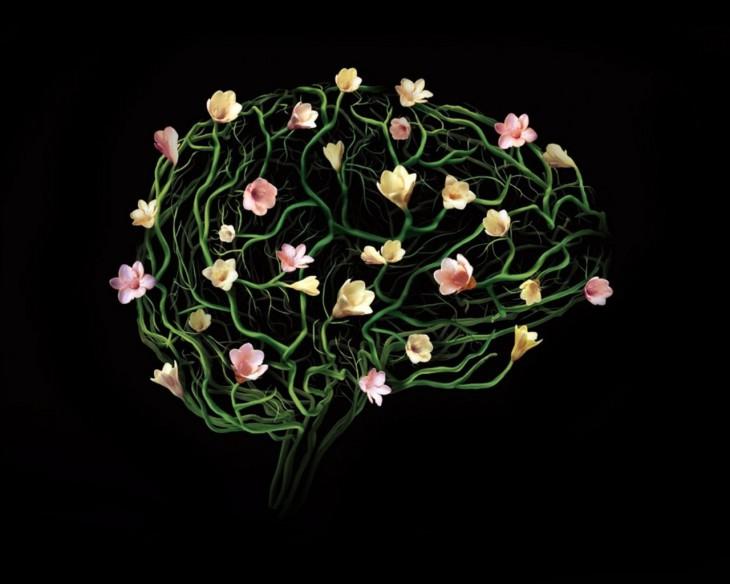 5 фактов о том, как наш мозг превращает нас в идиотов