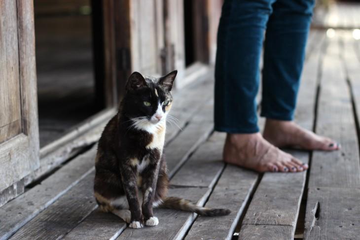 Ученые рассказали, почему кошки предпочитают одиночество