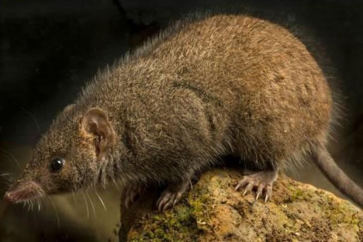 10 новых видов животных, открытых за последний год