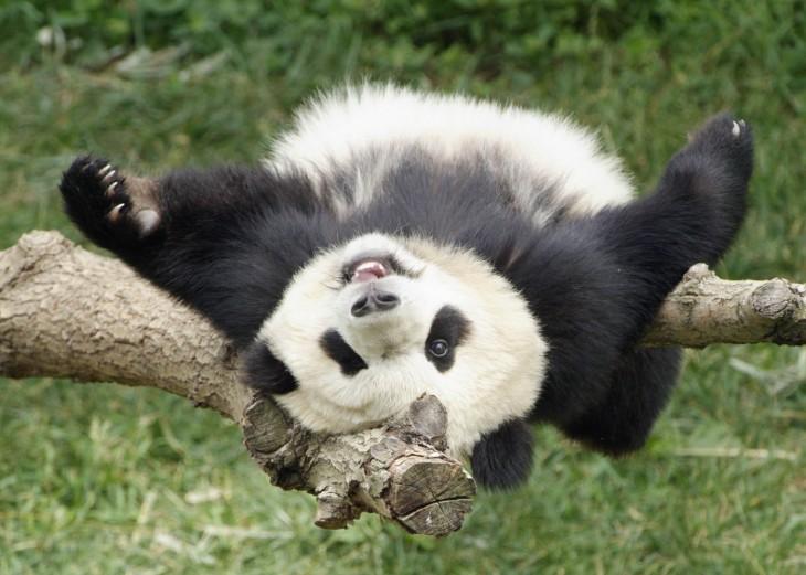 Оргазм у панд фото 404-412