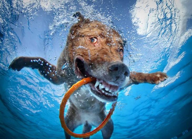 25 поразительных фото, на которых нет фотошопа