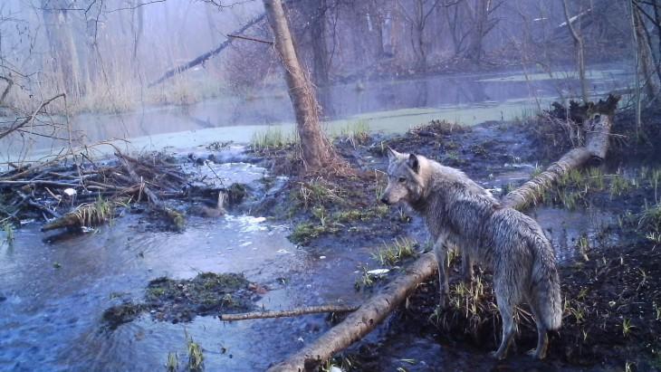 Sergey Gashchak/Chernobyl Centre