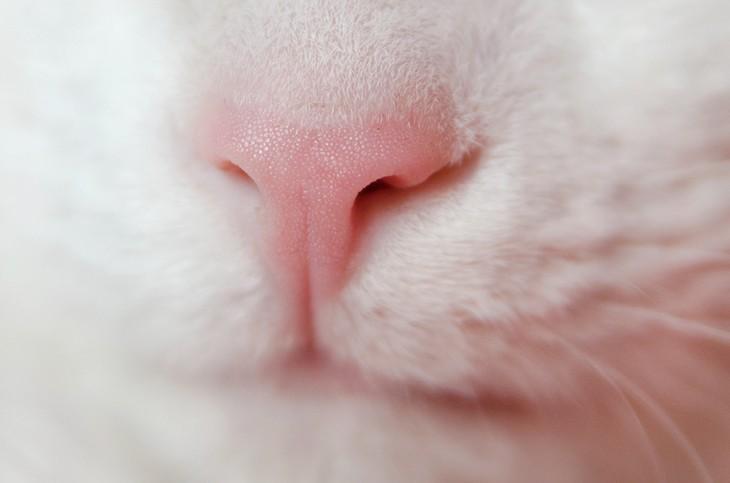 10 классных коротких фактов о кошачьих