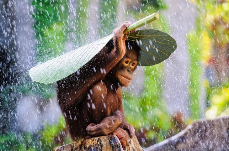 33 восхитительных фото, которых не касался фотошоп
