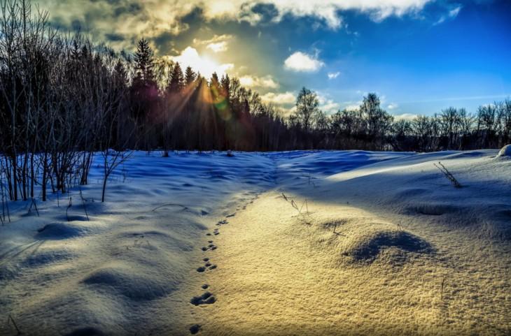 © Aleksei Grigorev
