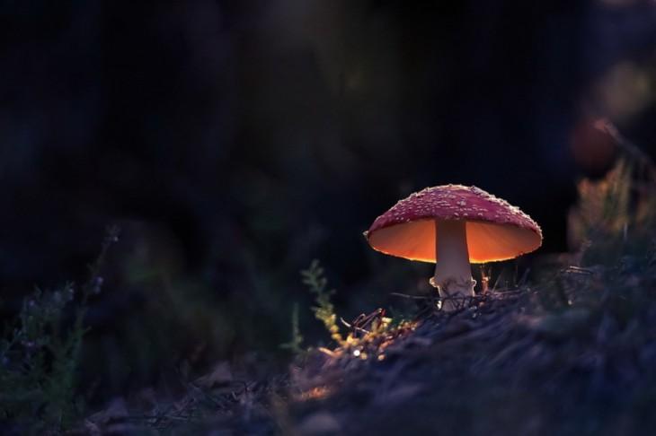 © Vyacheslav Mishchenko