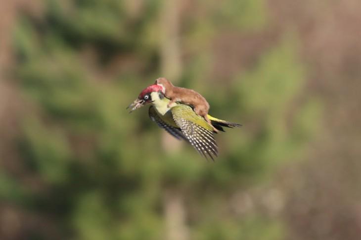 Prairiebirder