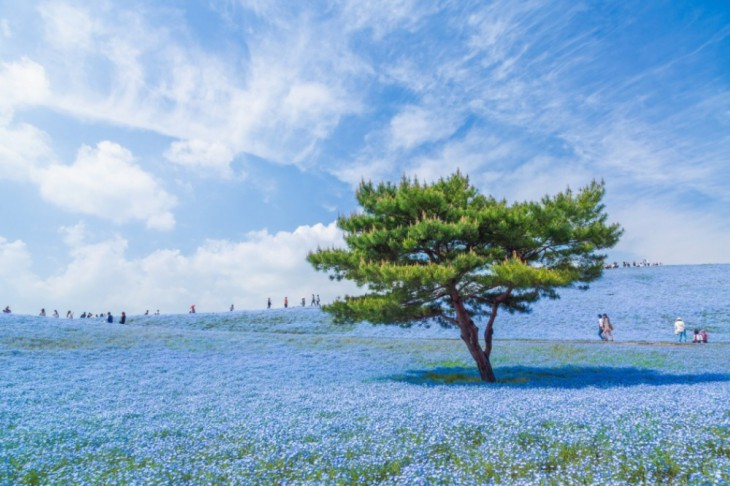 © Hiroki Kondu / National Geographic