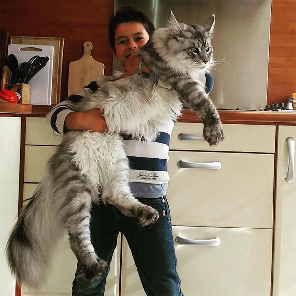 кот мэйкун фото