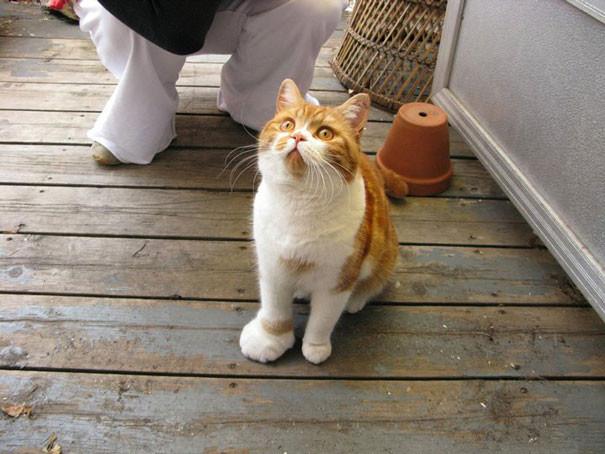 20 уморительных котов, ужаленных пчёлами