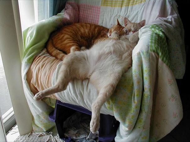 30 фотографий, доказывающих, что коты могут спать где угодно