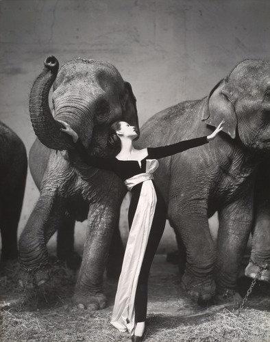 15 самых дорогих фотографий в мире. За эти снимки заплатили миллионы!