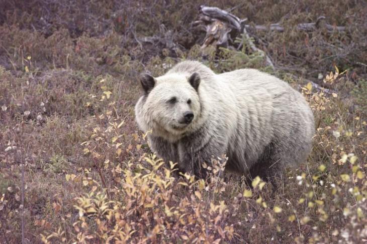 Animalreader.ru
