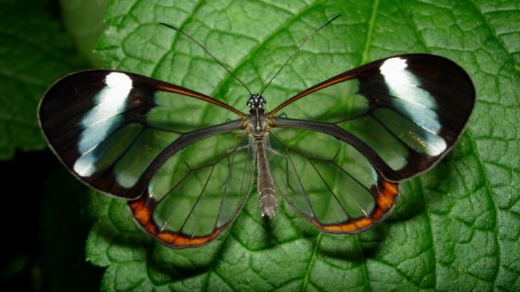 20 нереальных фотографий, над эффектностью которых потрудилась сама природа