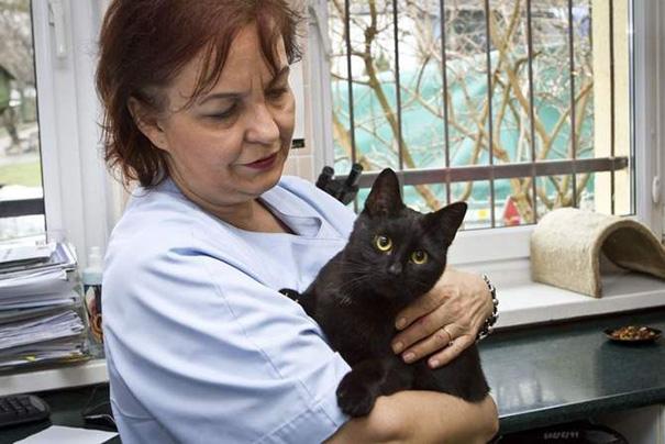 Фото 10 - удивительная кошка медсестра помогает ухаживать за больными животными