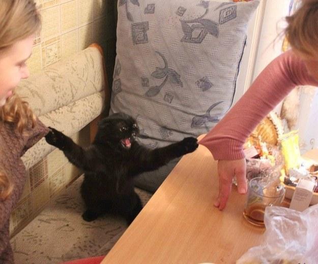 20 вещей, которые поймёт каждый обладатель злого котика