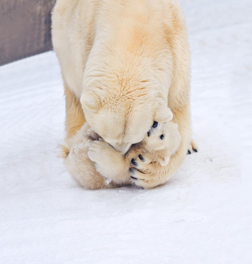 я люблю белых медведей милой Ольги Расписание