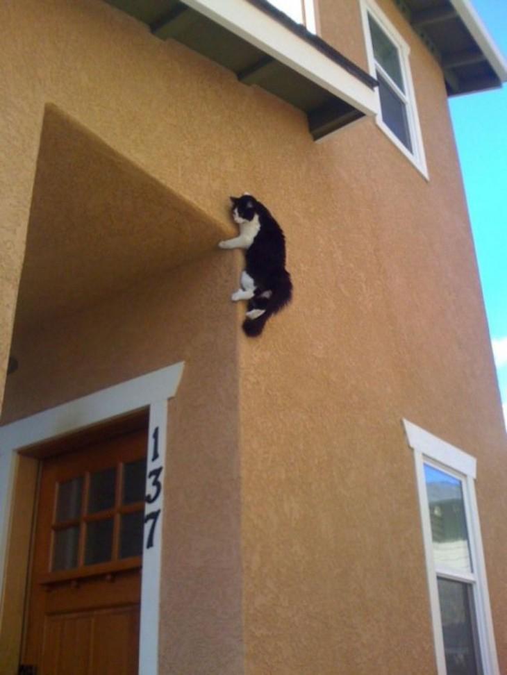 15 мест, где мы никак не ожидали увидеть кота