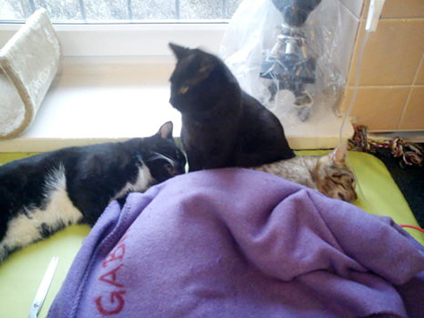 Фото 6 - удивительная кошка медсестра помогает ухаживать за больными животными